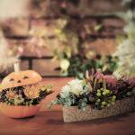 10月 ハロウィンと花撮影の広告写真撮影